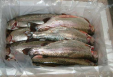 Frozen rainbow trout fish